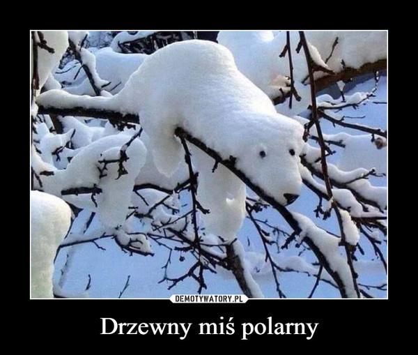Drzewny miś polarny –