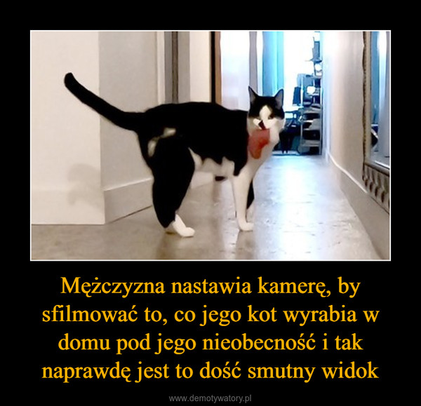 Mężczyzna nastawia kamerę, by sfilmować to, co jego kot wyrabia w domu pod jego nieobecność i tak naprawdę jest to dość smutny widok –