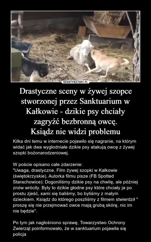 Drastyczne sceny w żywej szopce stworzonej przez Sanktuarium w Kałkowie - dzikie psy chciały zagryźć bezbronną owcę. Ksiądz nie widzi problemu