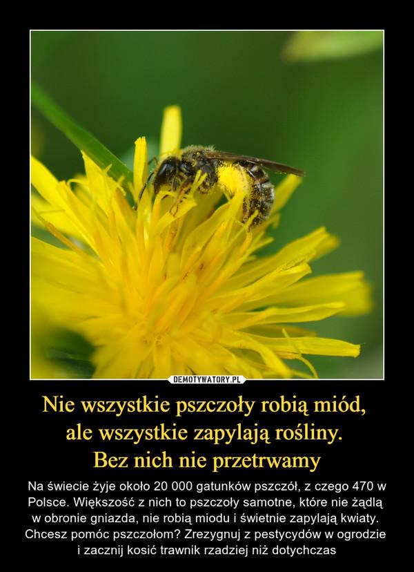 Nie wszystkie pszczoły robią miód, ale wszystkie zapylają rośliny. Bez nich nie przetrwamy – Na świecie żyje około 20 000 gatunków pszczół, z czego 470 w Polsce. Większość z nich to pszczoły samotne, które nie żądlą w obronie gniazda, nie robią miodu i świetnie zapylają kwiaty. Chcesz pomóc pszczołom? Zrezygnuj z pestycydów w ogrodzie i zacznij kosić trawnik rzadziej niż dotychczas