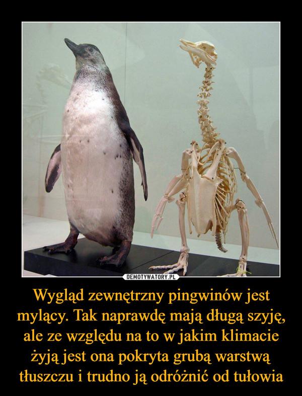 Wygląd zewnętrzny pingwinów jest mylący. Tak naprawdę mają długą szyję, ale ze względu na to w jakim klimacie żyją jest ona pokryta grubą warstwą tłuszczu i trudno ją odróżnić od tułowia –