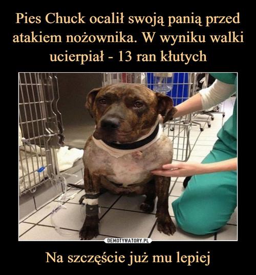 Pies Chuck ocalił swoją panią przed atakiem nożownika. W wyniku walki ucierpiał - 13 ran kłutych Na szczęście już mu lepiej