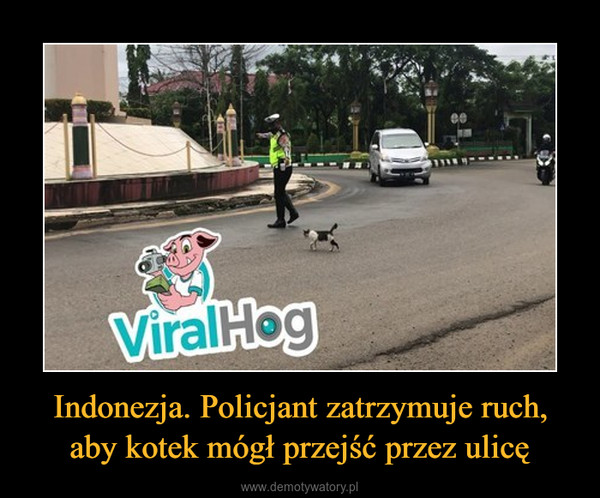 Indonezja. Policjant zatrzymuje ruch, aby kotek mógł przejść przez ulicę –