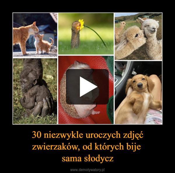 30 niezwykle uroczych zdjęć zwierzaków, od których bije sama słodycz –