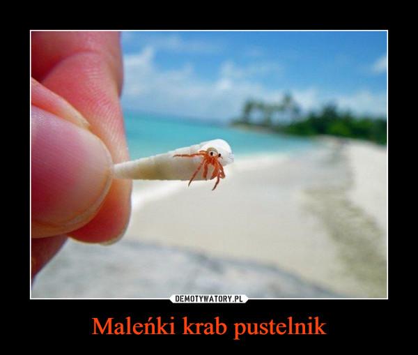 Maleńki krab pustelnik –