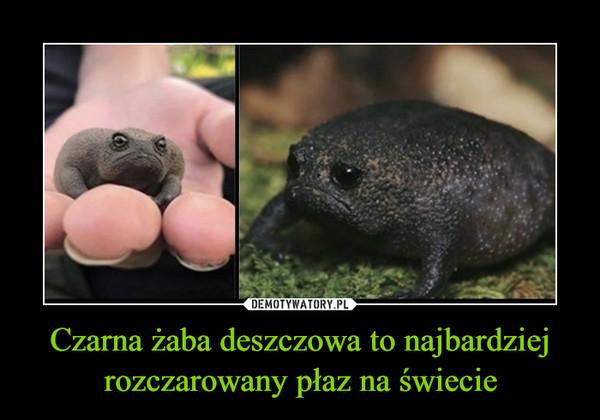 Czarna żaba deszczowa to najbardziej rozczarowany płaz na świecie