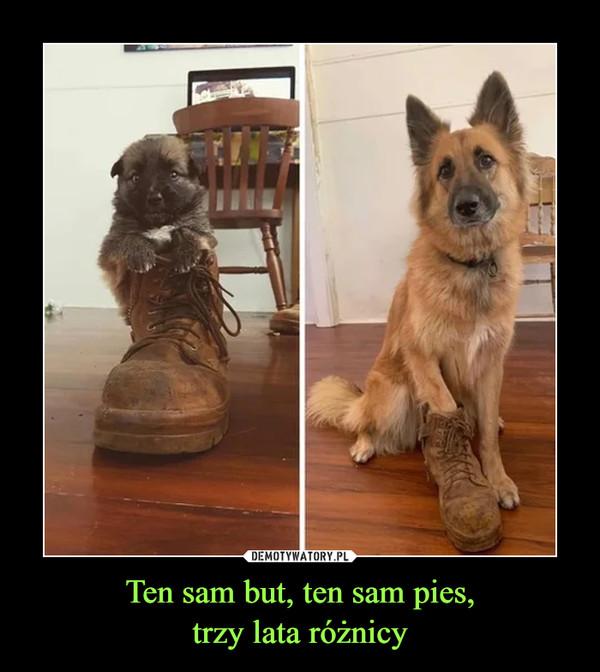 Ten sam but, ten sam pies,trzy lata różnicy –