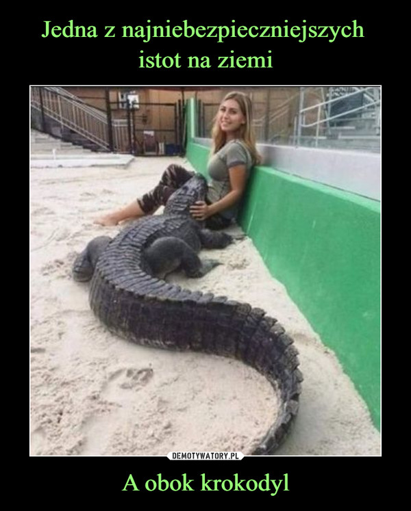 A obok krokodyl –