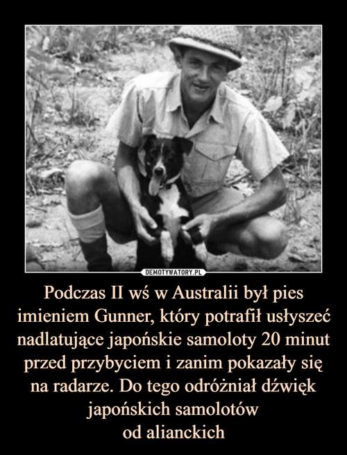 Podczas II wś w Australii był pies imieniem Gunner, który potrafił usłyszeć nadlatujące japońskie samoloty 20 minut przed przybyciem i zanim pokazały się na radarze. Do tego odróżniał dźwięk japońskich samolotów od alianckich