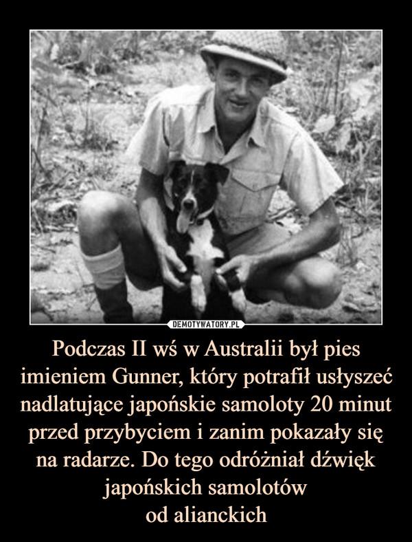 Podczas II wś w Australii był pies imieniem Gunner, który potrafił usłyszeć nadlatujące japońskie samoloty 20 minut przed przybyciem i zanim pokazały się na radarze. Do tego odróżniał dźwięk japońskich samolotówod alianckich –