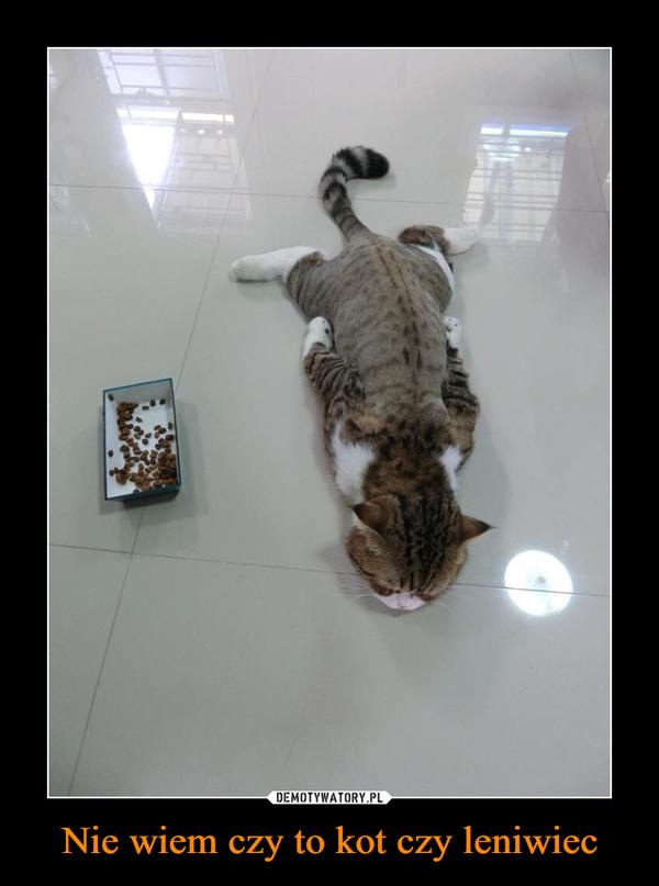 Nie wiem czy to kot czy leniwiec –