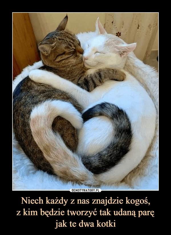 Niech każdy z nas znajdzie kogoś,z kim będzie tworzyć tak udaną paręjak te dwa kotki –