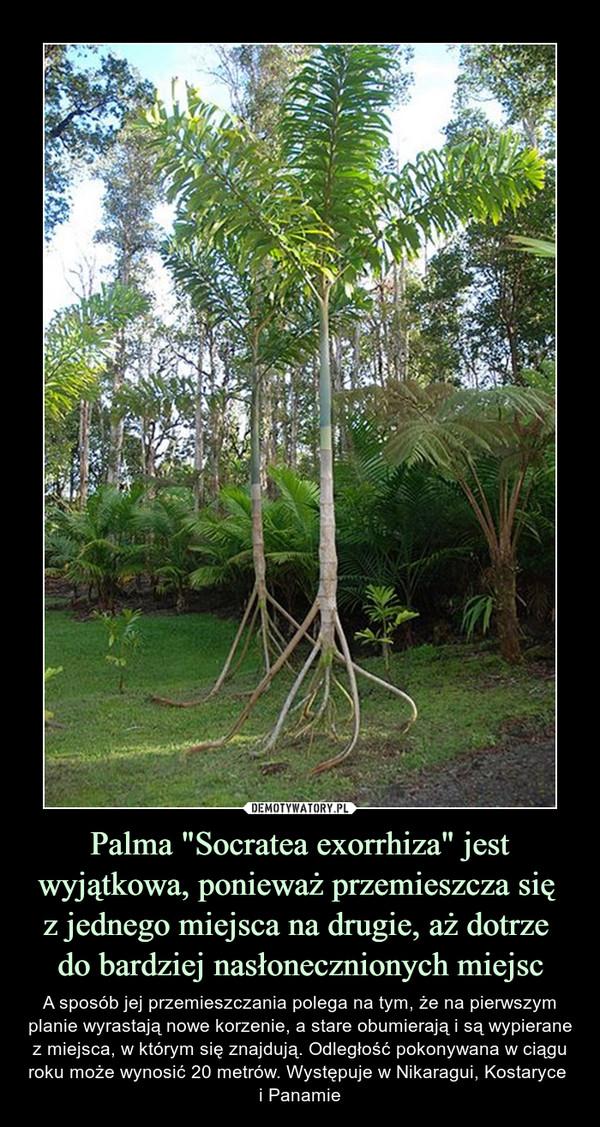 """Palma """"Socratea exorrhiza"""" jest wyjątkowa, ponieważ przemieszcza się z jednego miejsca na drugie, aż dotrze do bardziej nasłonecznionych miejsc – A sposób jej przemieszczania polega na tym, że na pierwszym planie wyrastają nowe korzenie, a stare obumierają i są wypierane z miejsca, w którym się znajdują. Odległość pokonywana w ciągu roku może wynosić 20 metrów. Występuje w Nikaragui, Kostaryce i Panamie"""