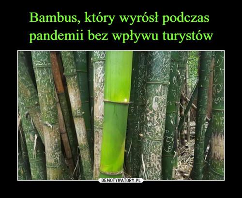 Bambus, który wyrósł podczas  pandemii bez wpływu turystów