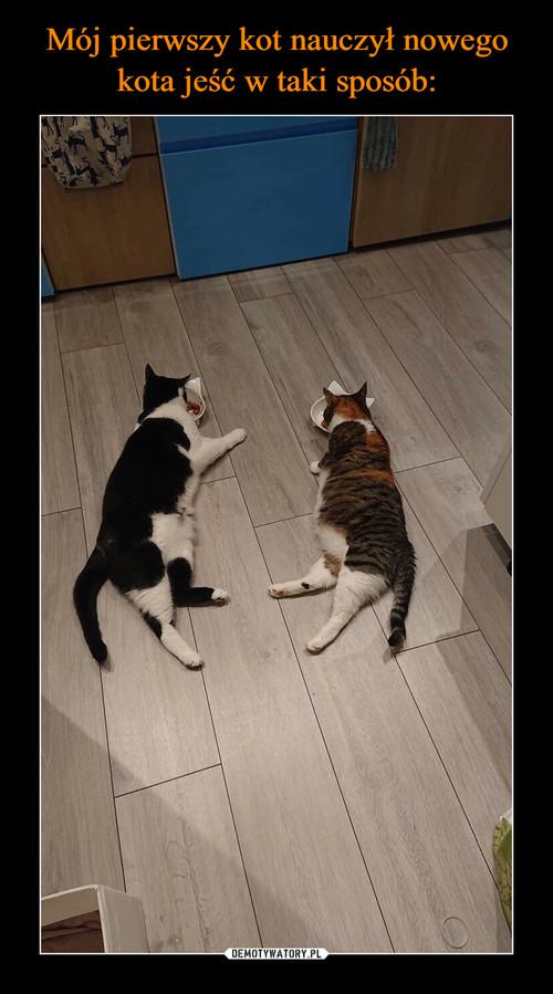 Mój pierwszy kot nauczył nowego kota jeść w taki sposób: