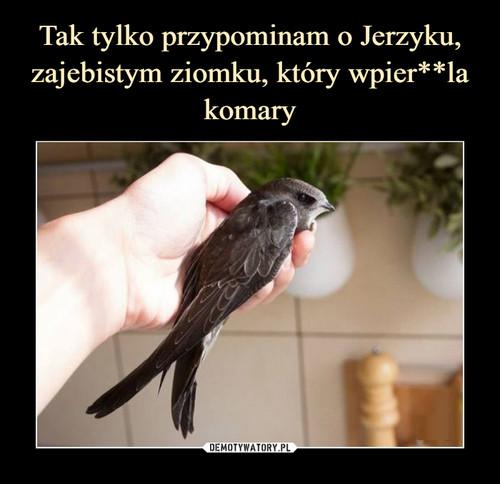 Tak tylko przypominam o Jerzyku, zajebistym ziomku, który wpier**la komary