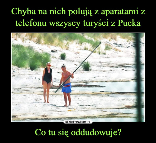 Chyba na nich polują z aparatami z telefonu wszyscy turyści z Pucka Co tu się oddudowuje?