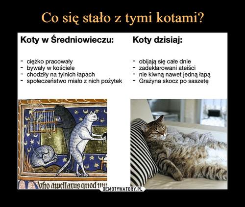Co się stało z tymi kotami?