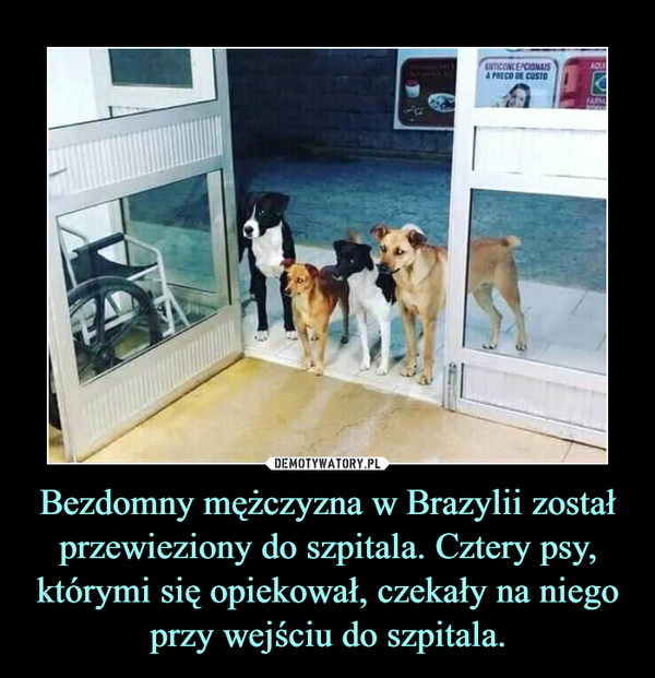 Bezdomny mężczyzna w Brazylii został przewieziony do szpitala. Cztery psy, którymi się opiekował, czekały na niego przy wejściu do szpitala. –