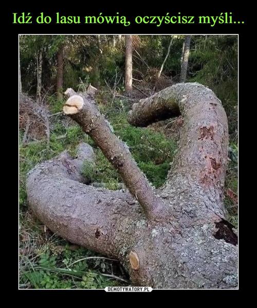 Idź do lasu mówią, oczyścisz myśli...