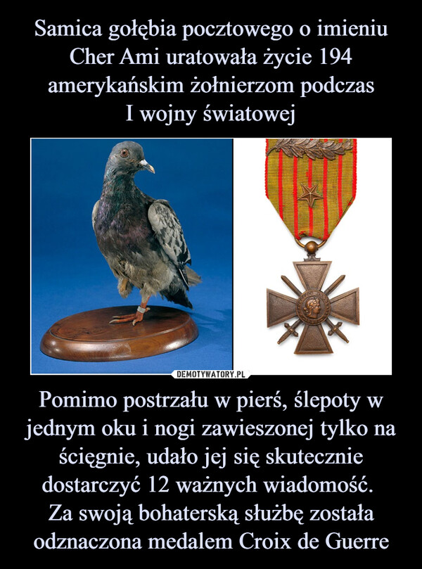 Pomimo postrzału w pierś, ślepoty w jednym oku i nogi zawieszonej tylko na ścięgnie, udało jej się skutecznie dostarczyć 12 ważnych wiadomość. Za swoją bohaterską służbę została odznaczona medalem Croix de Guerre –