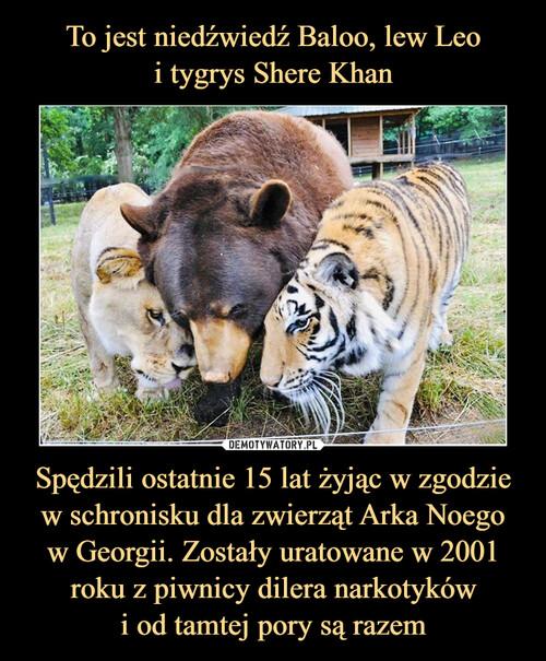To jest niedźwiedź Baloo, lew Leo i tygrys Shere Khan Spędzili ostatnie 15 lat żyjąc w zgodzie w schronisku dla zwierząt Arka Noego w Georgii. Zostały uratowane w 2001 roku z piwnicy dilera narkotyków i od tamtej pory są razem