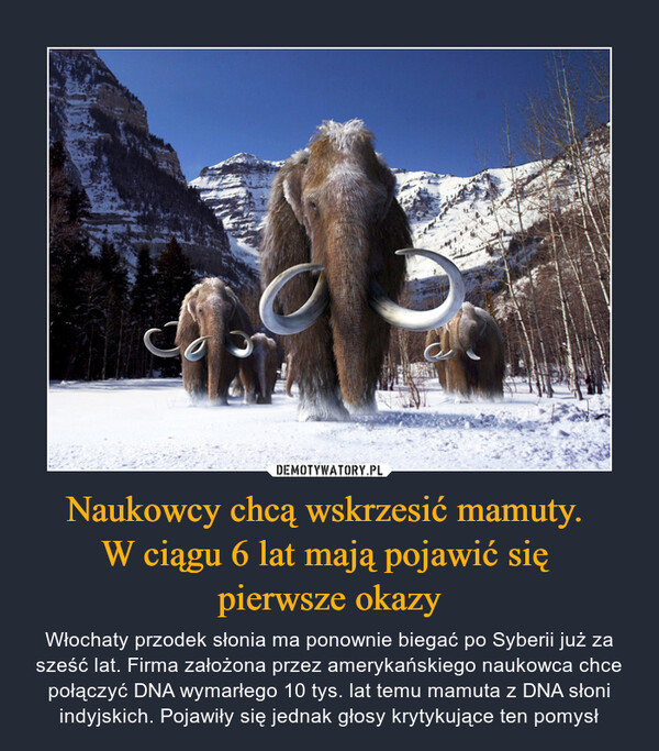 Naukowcy chcą wskrzesić mamuty. W ciągu 6 lat mają pojawić się pierwsze okazy – Włochaty przodek słonia ma ponownie biegać po Syberii już za sześć lat. Firma założona przez amerykańskiego naukowca chce połączyć DNA wymarłego 10 tys. lat temu mamuta z DNA słoni indyjskich. Pojawiły się jednak głosy krytykujące ten pomysł