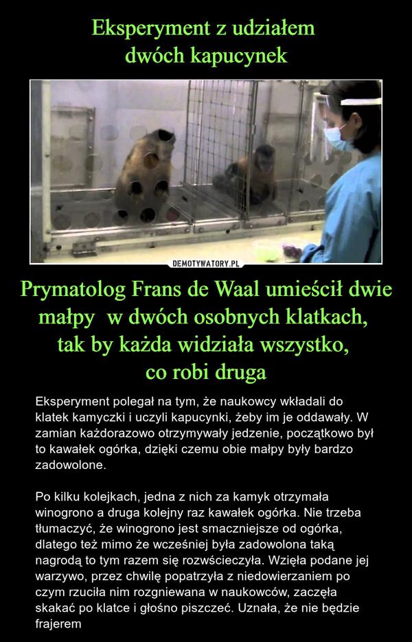 Prymatolog Frans de Waal umieścił dwie małpy  w dwóch osobnych klatkach, tak by każda widziała wszystko, co robi druga – Eksperyment polegał na tym, że naukowcy wkładali do klatek kamyczki i uczyli kapucynki, żeby im je oddawały. W zamian każdorazowo otrzymywały jedzenie, początkowo był to kawałek ogórka, dzięki czemu obie małpy były bardzo zadowolone. Po kilku kolejkach, jedna z nich za kamyk otrzymała winogrono a druga kolejny raz kawałek ogórka. Nie trzeba tłumaczyć, że winogrono jest smaczniejsze od ogórka, dlatego też mimo że wcześniej była zadowolona taką nagrodą to tym razem się rozwścieczyła. Wzięła podane jej warzywo, przez chwilę popatrzyła z niedowierzaniem po czym rzuciła nim rozgniewana w naukowców, zaczęła skakać po klatce i głośno piszczeć. Uznała, że nie będzie frajerem