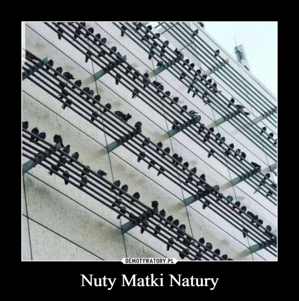 Nuty Matki Natury –