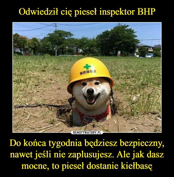Odwiedził cię pieseł inspektor BHP Do końca tygodnia będziesz bezpieczny, nawet jeśli nie zaplusujesz. Ale jak dasz mocne, to pieseł dostanie kiełbasę